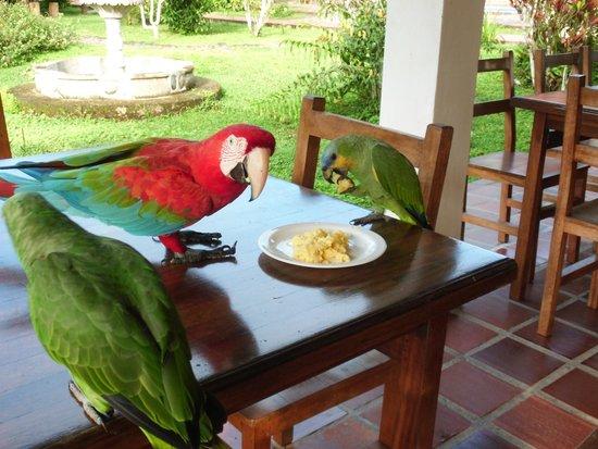 Jungle Lodge El Jardin Aleman: Frühstücksgäste
