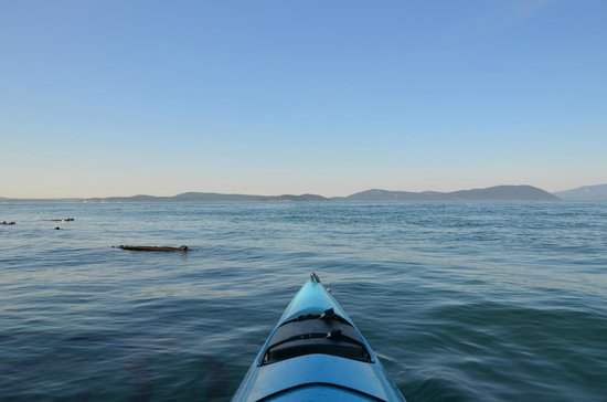 Anacortes Kayak Tours: The view from our kayak