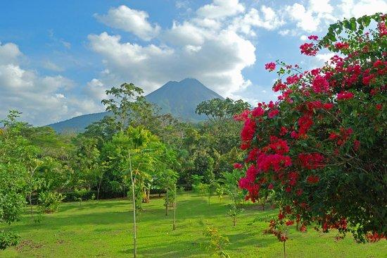 فولكانو لودج آند سبرينجس: Arenal Volcano View