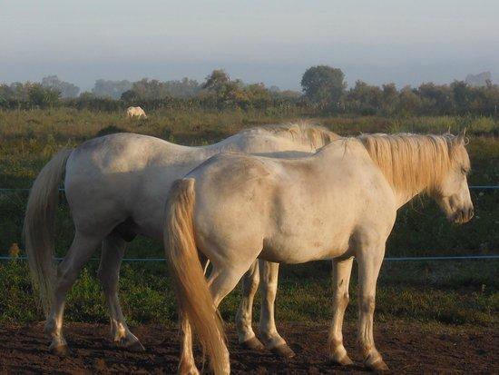 Brenda Centre de Tourisme Equestre Day Tours