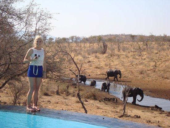 Royal Madikwe Luxury Safari Lodge: Ellies by the pool