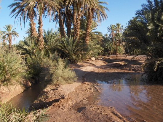 """Résultat de recherche d'images pour """"oasis désert"""""""