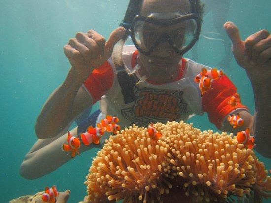 Karimunjawa: Foto Bersama Ikan Nemo di salah satu spot Snorkling