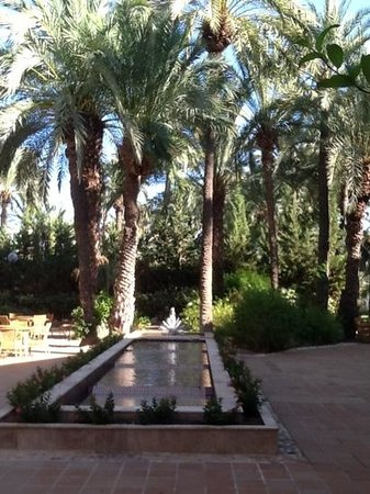 Jardin Milenio: JARDIN DEL HOTEL