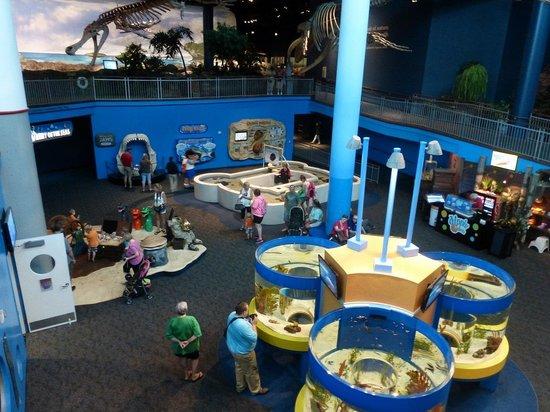 Discovery Center At Ripley 39 S Aquarium Of The Smokies