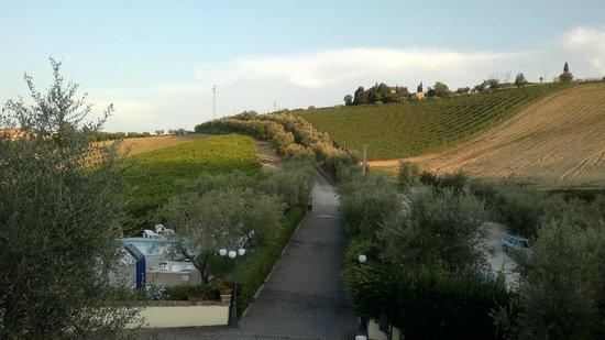 Agriturismo Il Crinale: viale d'accesso