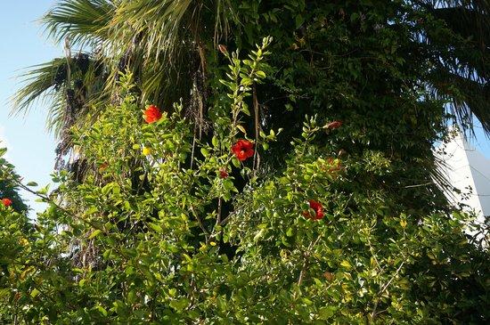 Hotel Karia Princess: Gartenanlage