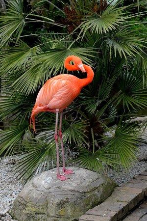 Birds of Eden: Flamingo
