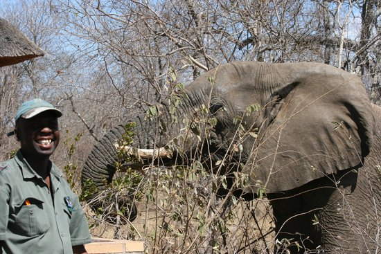 Little Garonga: CJ and the elephant that visited our camp!