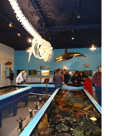 Sitka Sound Science Center: another touch tank