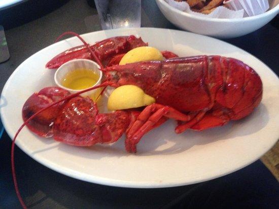 Barracuda Tavern: Lobster attack