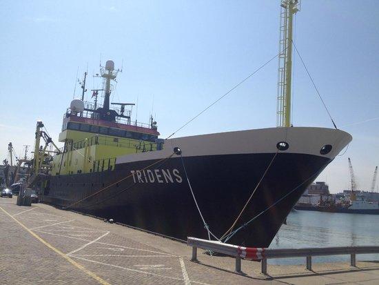 Pier and Promenade : Порт