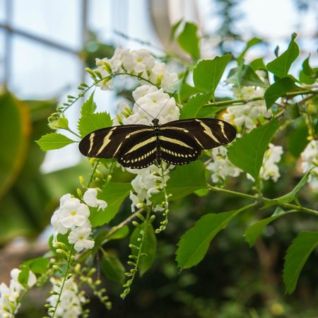 The Butterfly Room Foto Di Western Colorado Botanical Gardens Grand Junction Tripadvisor