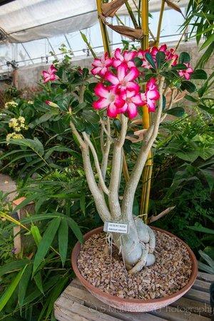 Grand Junction, CO: Indoor flower display