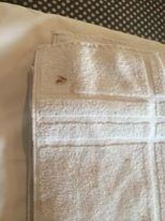 ATN: Feces on towel