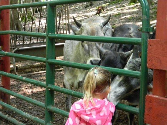 Adirondack Animal Land: Feeding Time.
