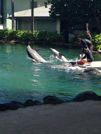 Dolphin Quest: dolphins in the lagoon