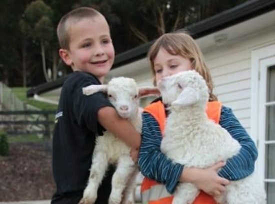 A Kiwi Farmstay: Kid friendly