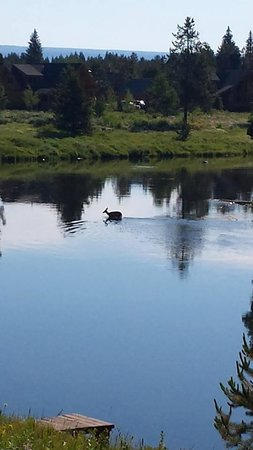 Island Park, ID: Deer wading across Buffalo River pic taken from deck