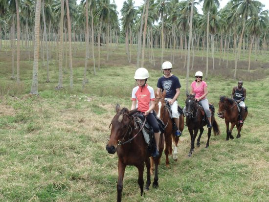 Lope Lope Lodge: through the coconut plantation