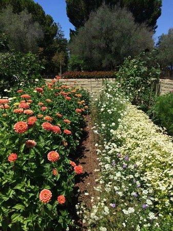 Sunset Magazine Headquarters and Gardens: Garden!