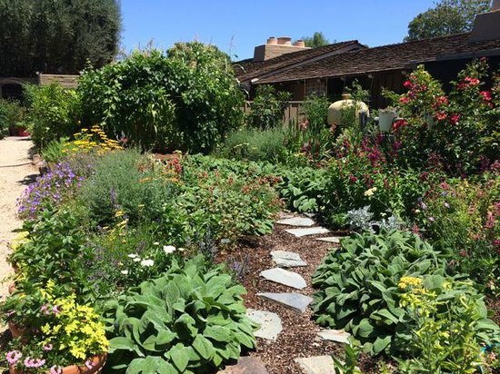 Menlo Park, Californie : Great variety of plant material!