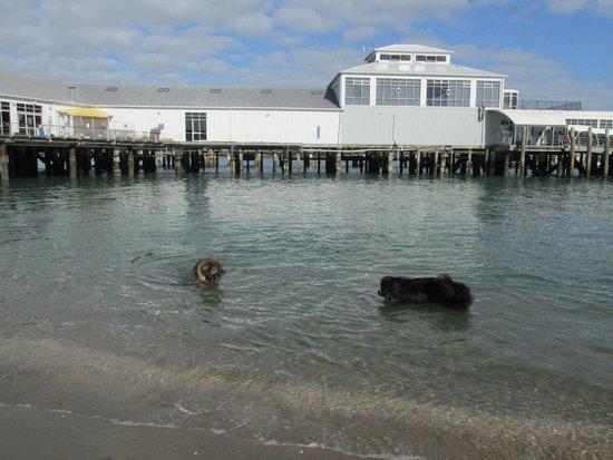 Hauraki Gulf: Devonport wharf