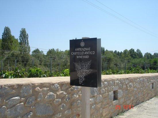 Castello Antico Beach Hotel: Castello Antico wineyard