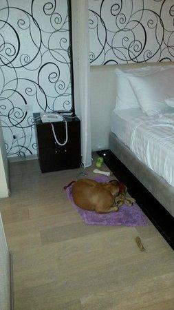 Tal Hotel, Tel Aviv - an Atlas Hotel: Dog friendly hotel
