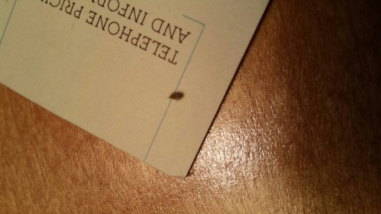 Towson, MD: Bedbug!!!!!!!