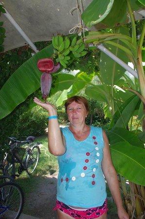 фото цветок банана
