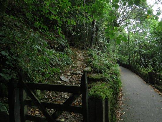 Woodlands Guesthouse: Il sentiero pedonale