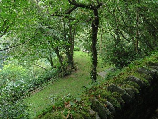 Woodlands Guesthouse: Giardino visibile dal sentiero pedonale