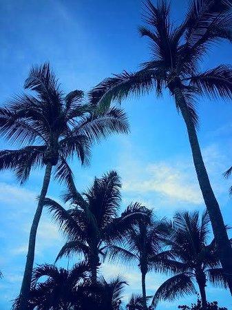 Tarpon Flats Inn: Beautiful Palms!