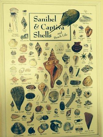 Shell Island Beach Club: Shell identification chart on the wall
