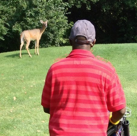 Southfield, MI: Golfers and deer watch each other.