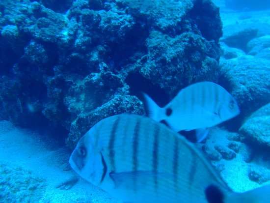 Deep Blue Diving Base: A great Place to Dive
