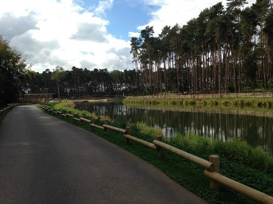 ‪‪Center Parcs Woburn Forest‬: Lake next to The Plaza‬