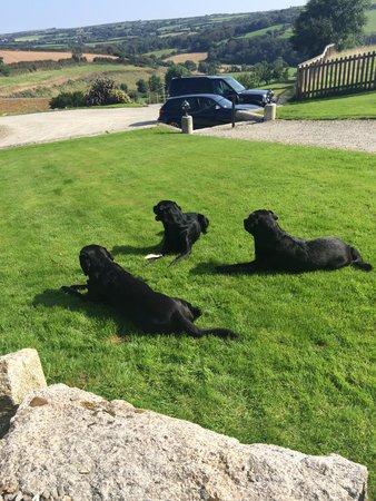 Helsbury Park : Three Happy Dogs