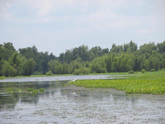 Mequet Swamp Tours: The Atchafalaya