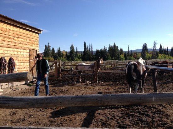 Medicine Bow Lodge: Horses :)
