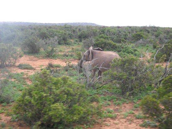 Parque nacional de los Elefantes de Addo: Baby elephant
