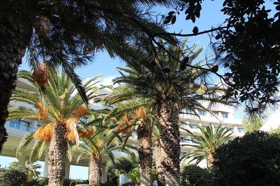Agapi Beach Hotel: Hotelanlage Agapi Beach