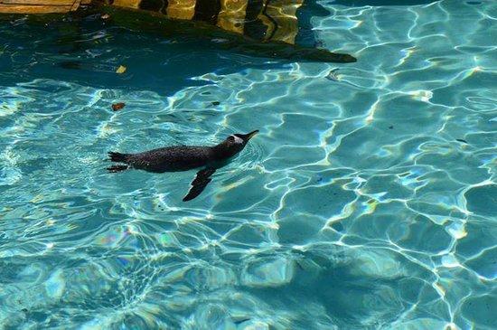 foca: fotograf?a de Bergen Aquarium, Bergen - TripAdvisor