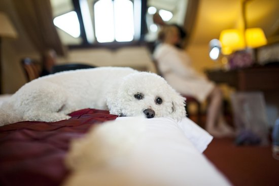 Hotel Bankov: Pet friendly hotel (here is a proof)