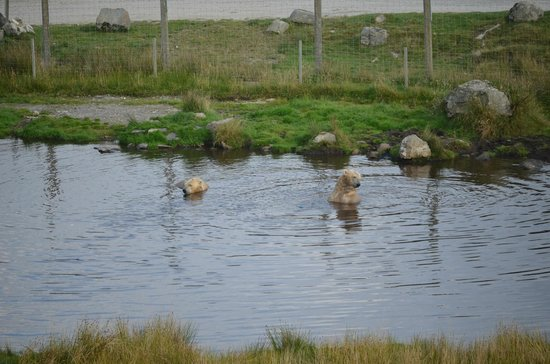 Highland Wildlife Park: Balancing on bucket