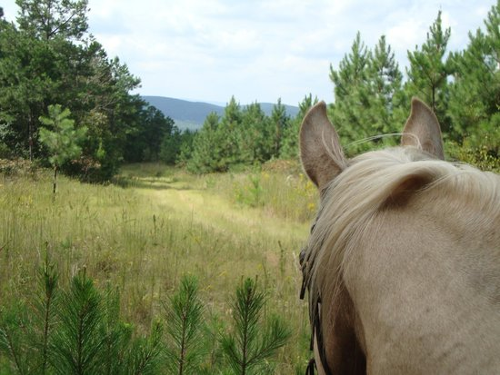 A to Z Guest Ranch: Looking out over moutain range view