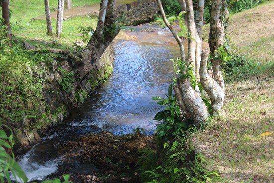 Busuanga Island Paradise: Dimanyan River runs thru the property