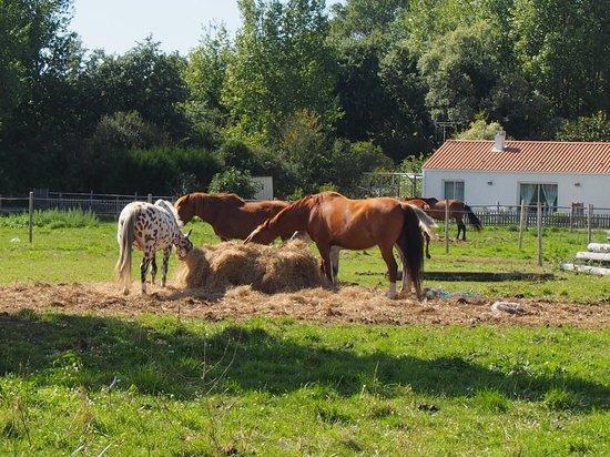 Les Grands Rochers : Vue sur les chevaux