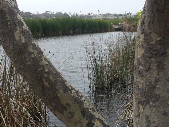 Buena Vista Audubon Society & Nature Center: Calming waters